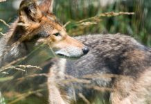 Coyote, nj environment news