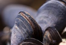 shellfish, ocean acidification