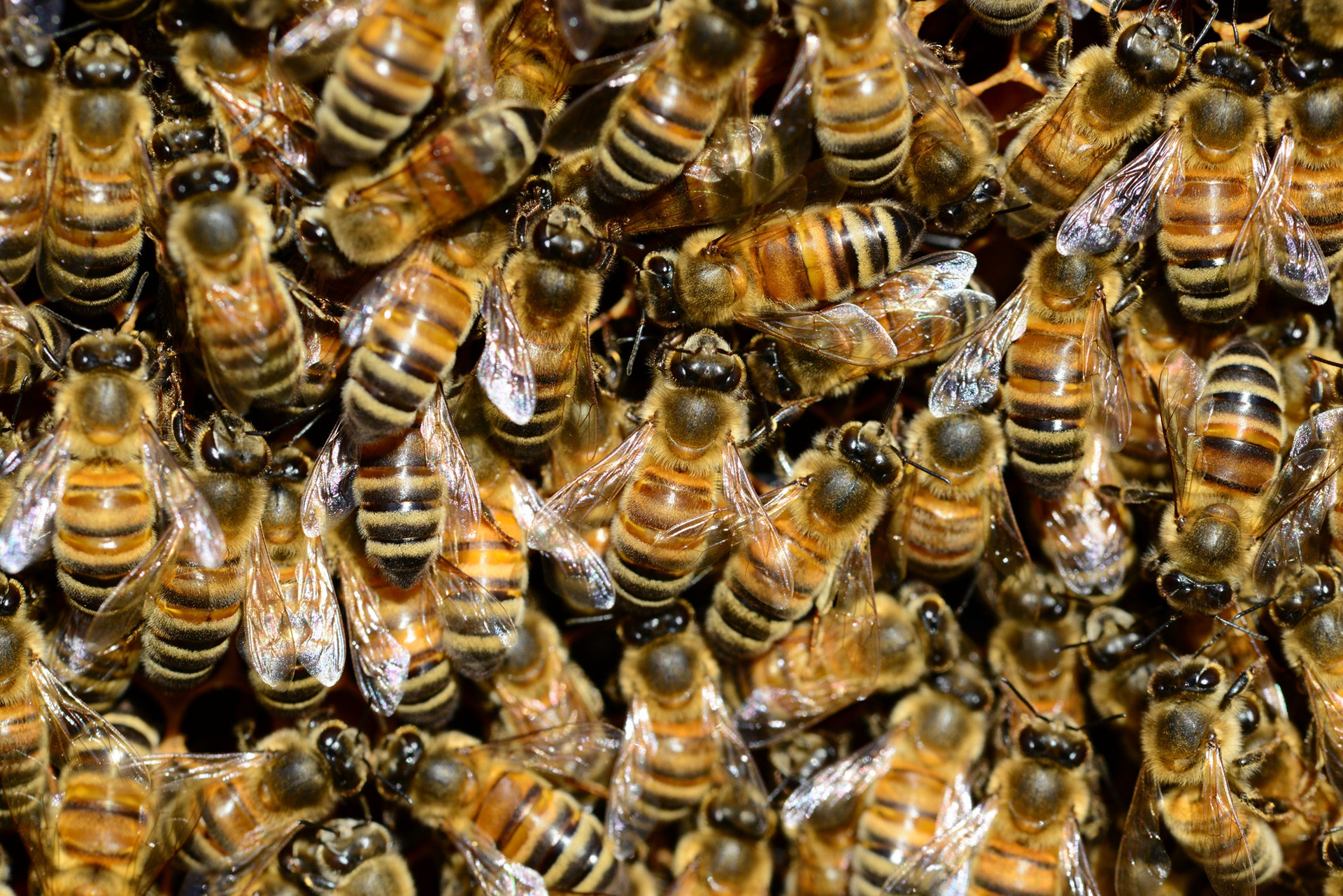 Insane' discovery: 30,000 bees — and 40 pounds of honey