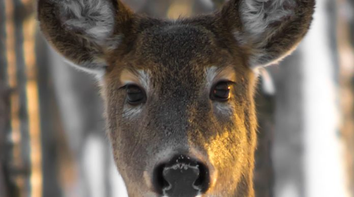 deer, wildlife, new jersey environment news