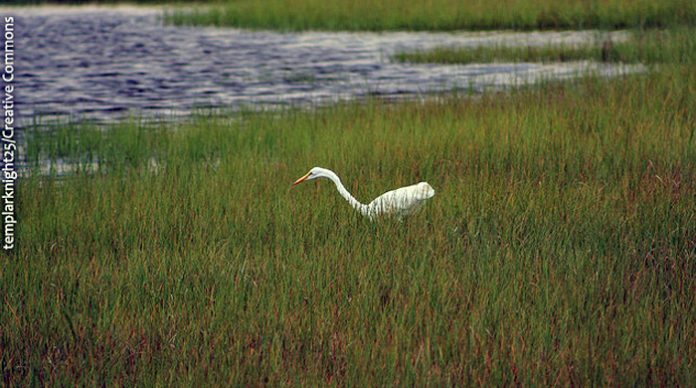 new jersey environment, shore, wildlife