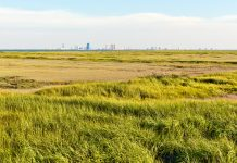 atlantic city, marsh, jersey shore