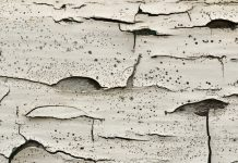lead poisoning, paint, new jersey environment