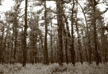 New Jersey Pinelands