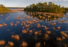 Makepeace Lake, Pinelands