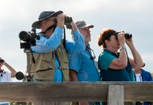 Birders in Cape May, NJ