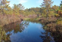 Bucks Cove Natue Preserve, Rancocas Conservancy